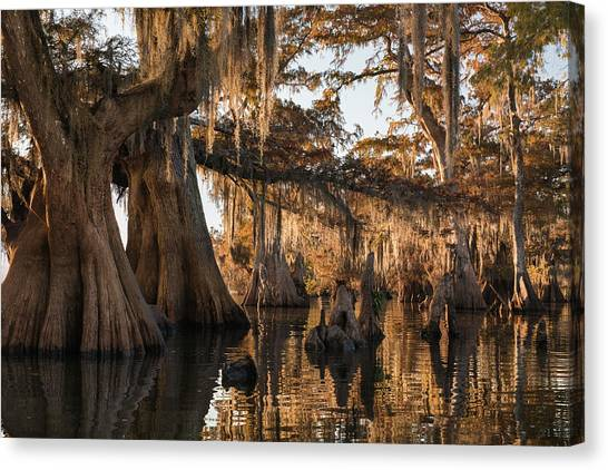 Atchafalaya Basin Canvas Print - Louisiana Swamp Giant Bald Cypress Trees Three by Bill Swindaman