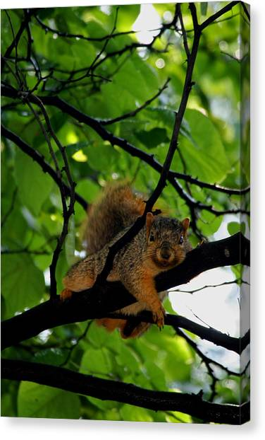 Lounge Squirrel Canvas Print by Martin Morehead
