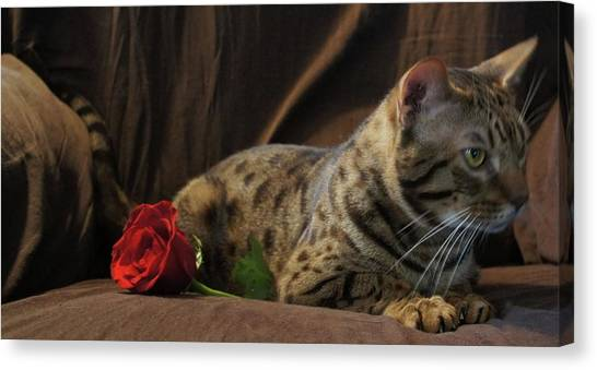 Ocicats Canvas Print - Love A Chocolate Ocicat by Anne McCulloch
