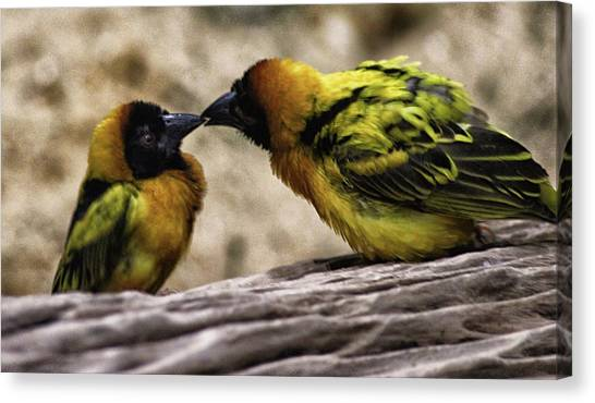 Finch Canvas Print - Love Birds by Martin Newman