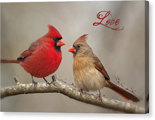 Cardinals Canvas Print - Love by Bonnie Barry