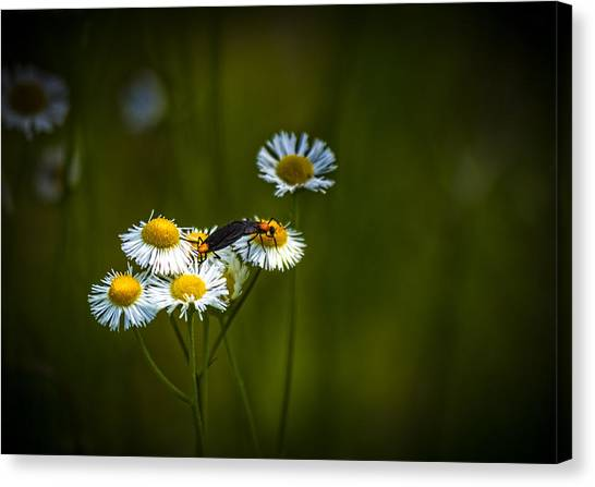 The Nile Canvas Print - Love Bugs by Marvin Spates