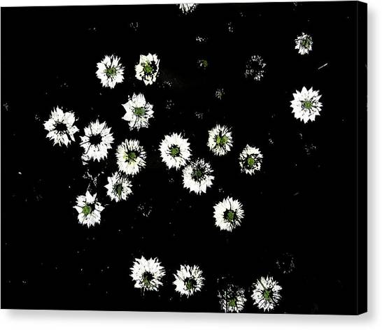 Love In A Mist Canvas Print by Dan McCarthy