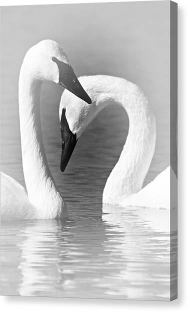 Love In Black And White Canvas Print