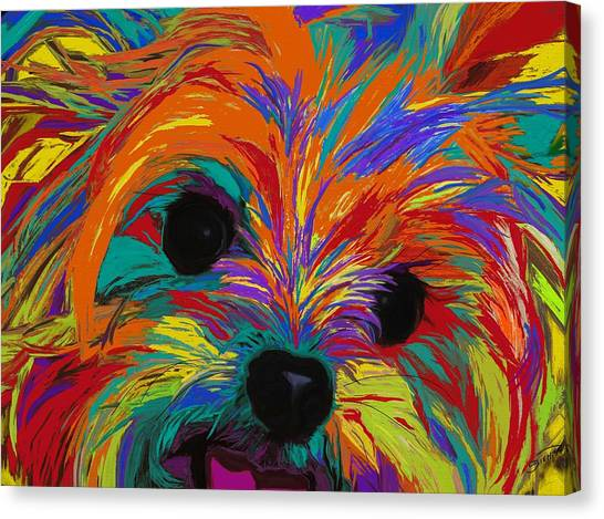 Yorkshire Terrier Canvas Print - Love In Color by Patti Siehien