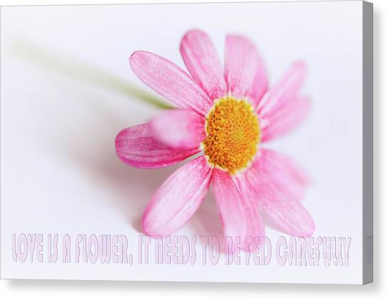 Canvas Print featuring the photograph Love Is A Flower by Nick Biemans