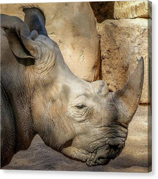 Rhinos Canvas Print - Love Is Like A Rhino....short-sighted, But Always Willing To Find A Way.. by In My Click Photography
