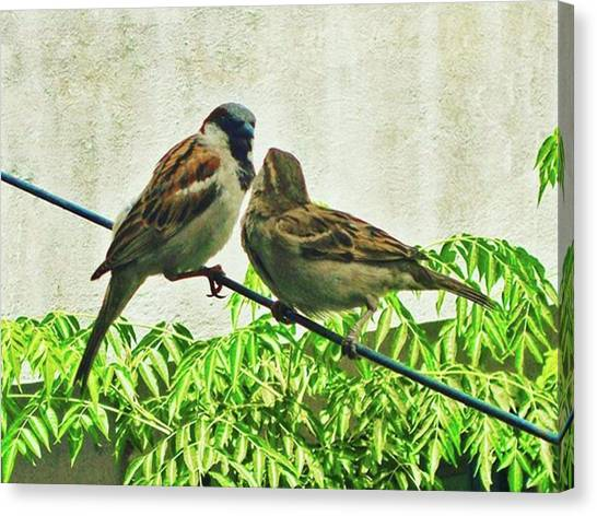 Lovebirds Canvas Print - #love Is The Feeling, To Collect This by Rahul Gupta