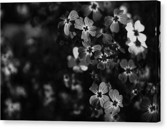 Uc Berkeley Canvas Print - Love Lost by Laurie Search