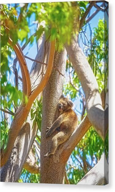 Love My Tree, Yanchep National Park Canvas Print