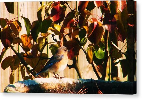 Love To See You Here Colorful Bird Canvas Print by Nereida Slesarchik Cedeno Wilcoxon