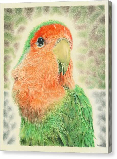 Lovebird Pilaf Canvas Print