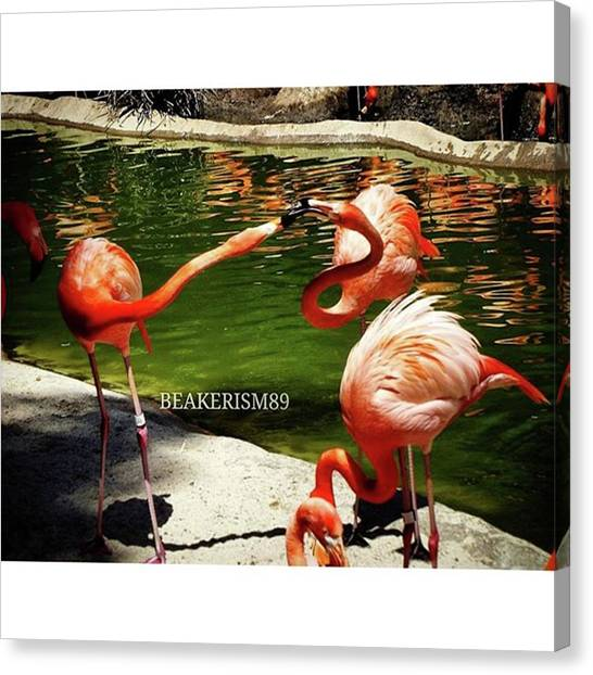 Lovebirds Canvas Print - #lovebirds#pink #flamingos #water by Jose Carmona