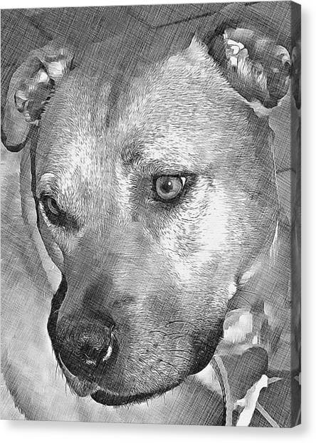 Lovely Dog Canvas Print