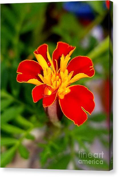 Lovely Little Flower Canvas Print