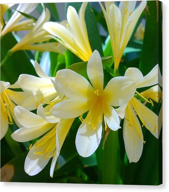Gardens Canvas Print - Lovely White And Yellow #flowers by Shari Warren