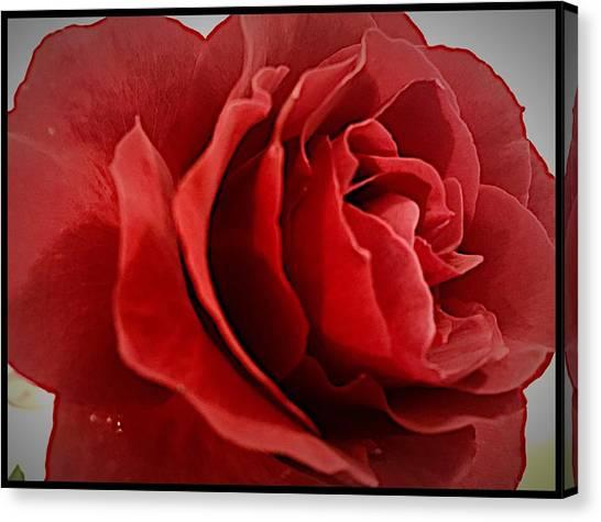 Love's Bloom Canvas Print