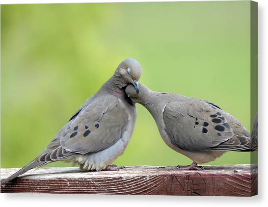 Lovey Doveys Canvas Print