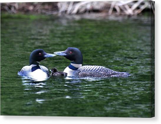 Loving Loon Parents Canvas Print
