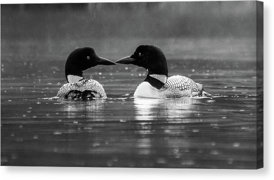 Loving Loons Canvas Print