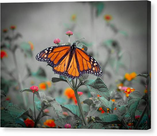 Loving The Lantana  Canvas Print