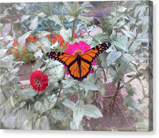 Loving The Zinnias Canvas Print