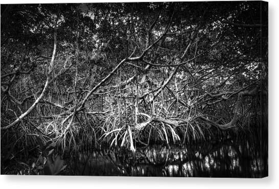 Mangrove Trees Canvas Print - Low Tide Bw by Marvin Spates