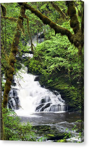 Lower Lunch Creek Falls Canvas Print