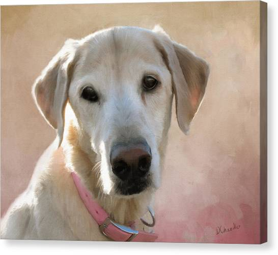 Lucy In Pink Canvas Print