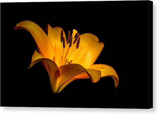 Luminous Lilly Canvas Print