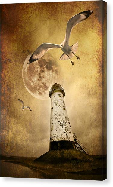 Seagulls Canvas Print - Lunar Flight by Meirion Matthias