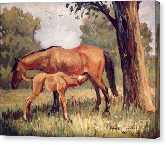 Lunchtime   Mare And Foal Canvas Print by JoAnne Corpany
