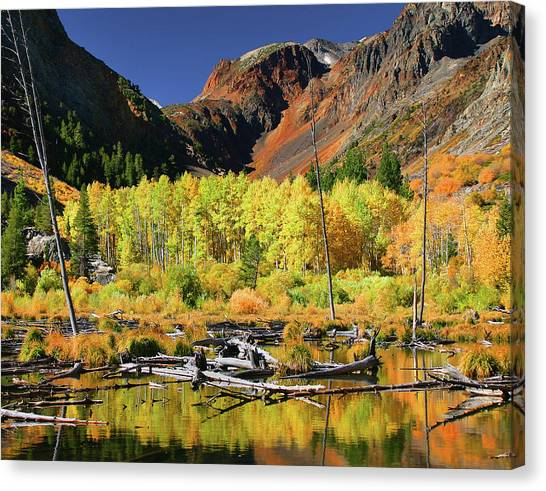 Lundy Canyon Beaver Pond Canvas Print by Tom Kidd