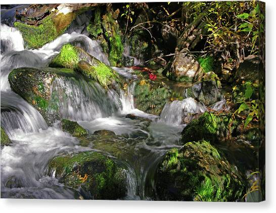 Lundy Creek 3 Canvas Print