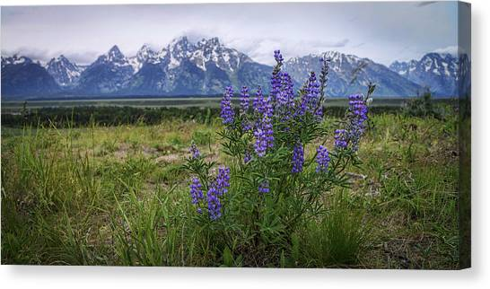 Mountain Sunset Canvas Print - Lupine Beauty by Chad Dutson
