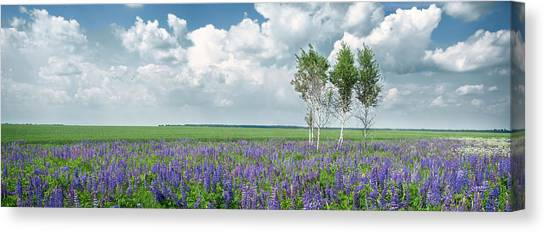Lupine Blooming. Rohizky, 2015. Canvas Print