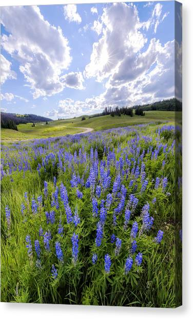 Uinta Canvas Print - Lupine Pass by Chad Dutson