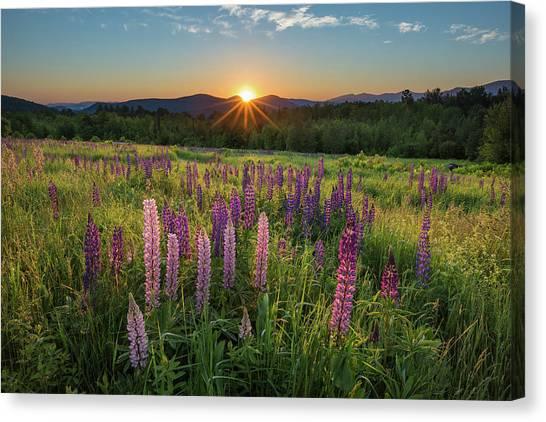 Lupine Sunrise Canvas Print