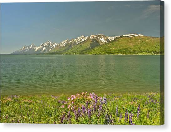 Lupines In The Tetons Canvas Print