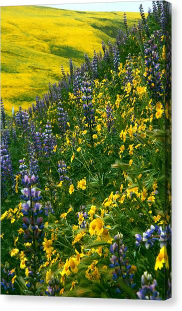 Lupins And Daisys Canvas Print