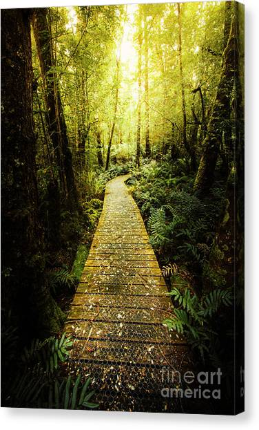 Rainforests Canvas Print - Lush Green Rainforest Walk by Jorgo Photography - Wall Art Gallery