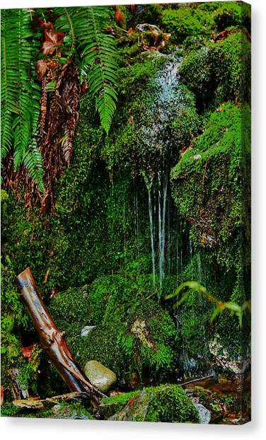 Vancouver Island Canvas Print - Lush Green by Victoria Clark