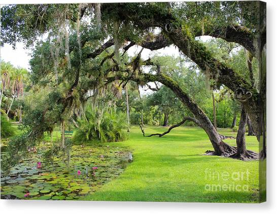 St. Lucie County Canvas Print - Lush Oak Arches by Liesl Walsh