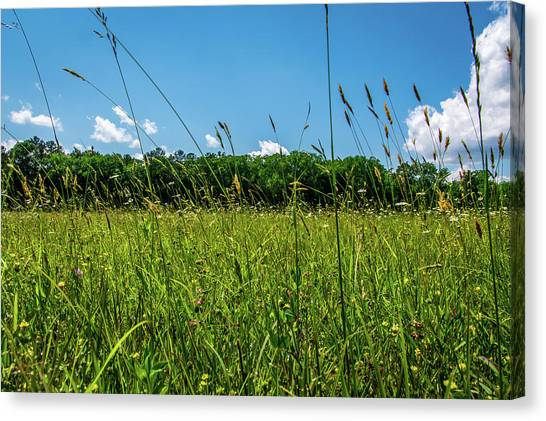 Lying In The Grass Canvas Print