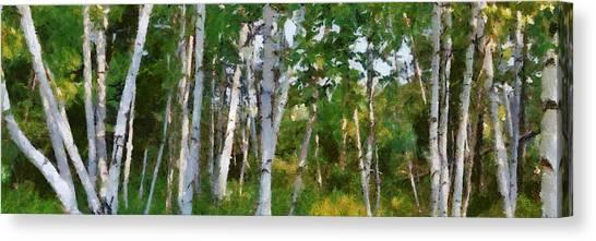 M-22 Birches Canvas Print