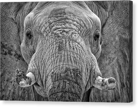 Canvas Print featuring the photograph Mabu Up Close N Personal by Elaine Malott