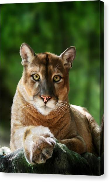 Charities Canvas Print - Mac by Big Cat Rescue