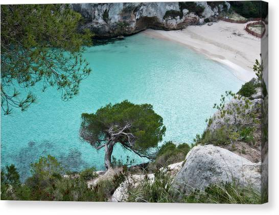 Macarelleta Turquoise Jewell By Pedro Cardona Canvas Print