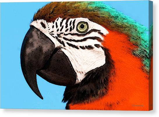 Macaws Canvas Print - Macaw Bird - Rain Forest Royalty by Sharon Cummings