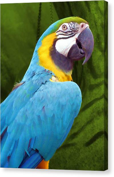 Macaw Canvas Print by JAMART Photography